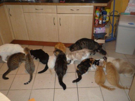mes chats qui mangent