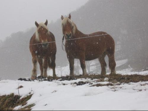 chevauxHautecour