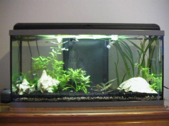 comment bien decorer aquarium
