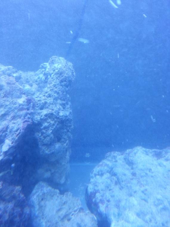 au fond entre les pierres ont peut distinguer une petite étoile de mer :)