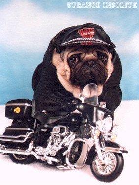 chien_moto_dog_146d5f