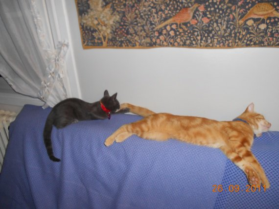Spirou et Gus septembre 2011