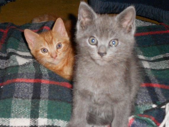 Gus et Grizou
