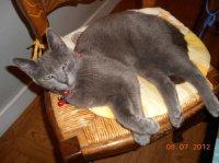 Grizou confortable le coussin