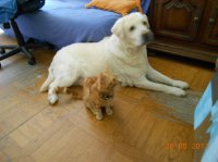 Ricky et Gus 2