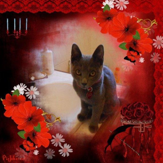 Grizou 2012