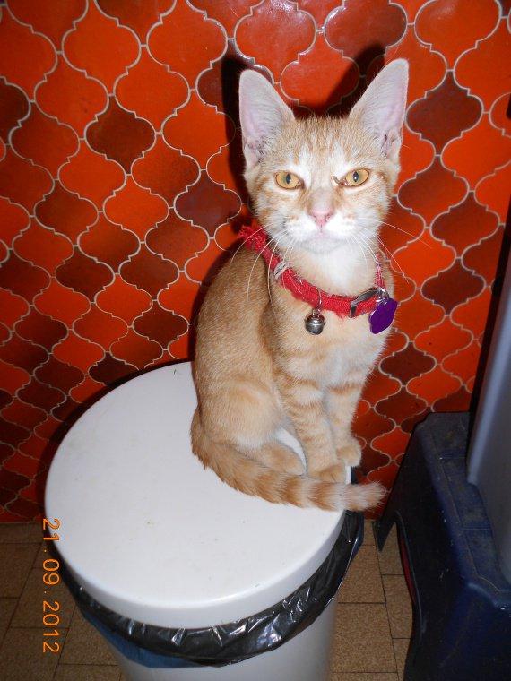Hilda Miss poubelle