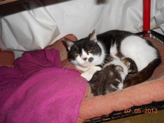 Les chatons nés le 22.04.2013