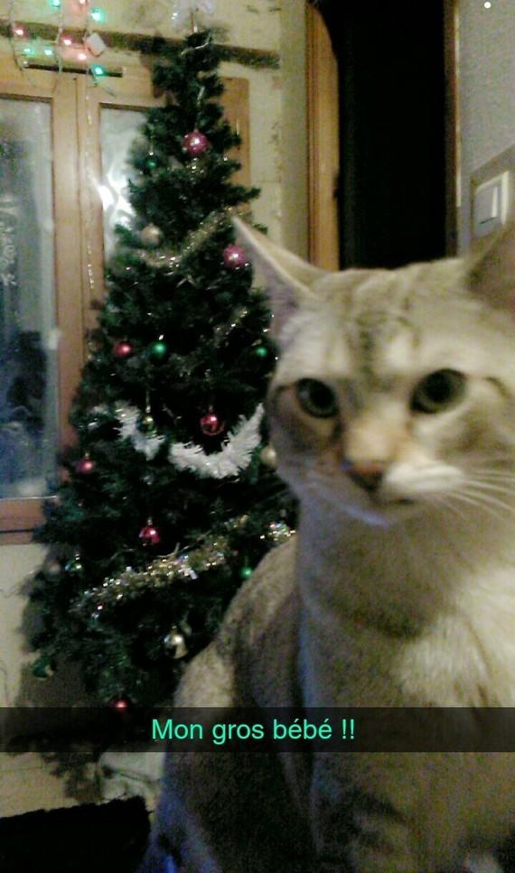 Une petite photo de mon chat