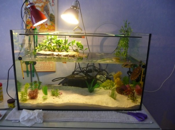 Tortue de floride aquariums et vivariums forum animaux for Aquarium tortue