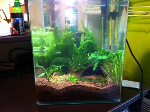 Achat d 39 un aquarium besoin de conseil aquariums et for Achat grand aquarium