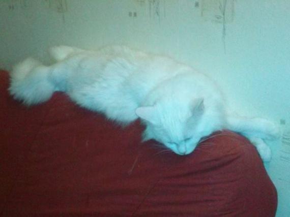 Neige a retrouvé son canapé
