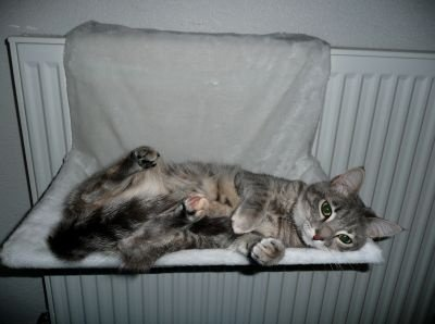 17_tapisderadiateur_zooplus_happycat