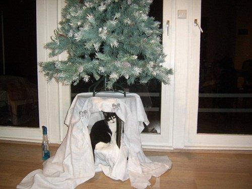 chat-et-sapin-de-Noel-Suricat-prend-la-place-de-la-creche-28-11-2011
