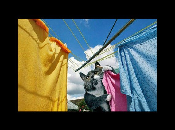 chat-linge-diligent-housewife