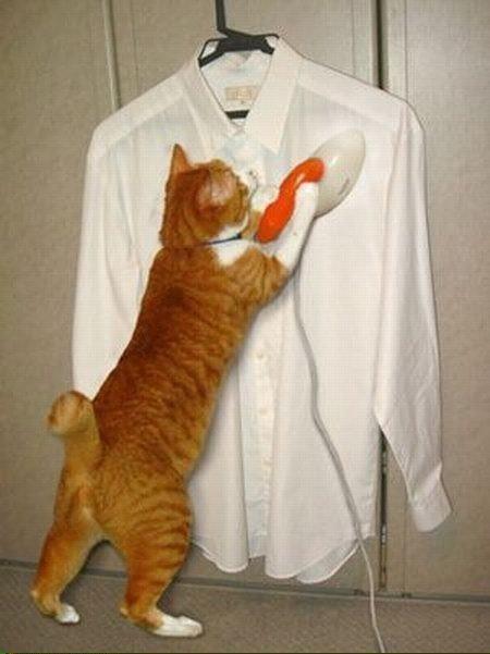 ironing_cat