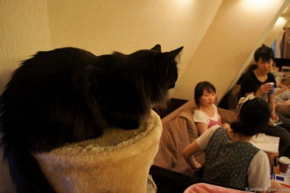 neko-cafe-japan-6-1024x681