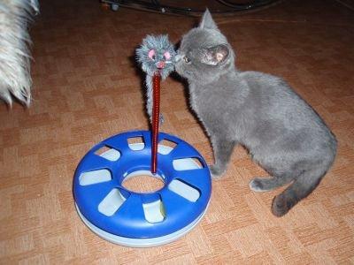 Jouet pour chat Cat-Track_Trixie_Zooplus_promo6E99_Archie