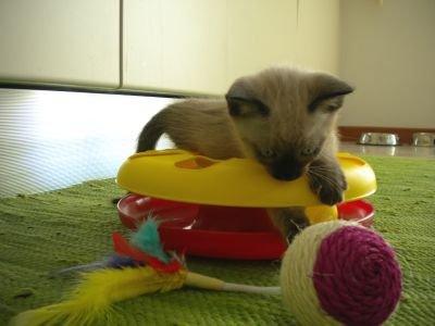 Jouet pour chat Cat-Track_zooplus_promo6E95_Rio
