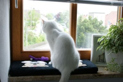 Tapis de fenêtre pour chat Kitty Cosy_promo13E90_