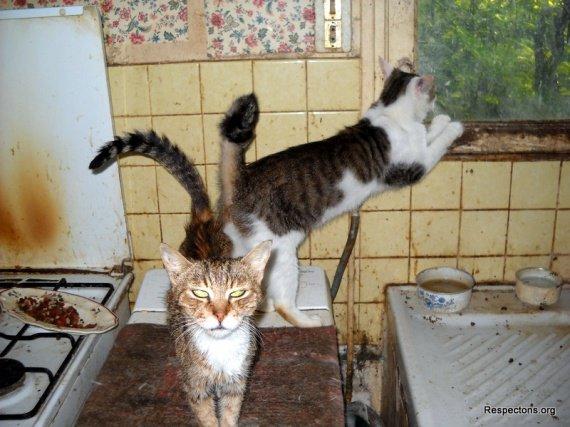 chats-dans-cuisine-2