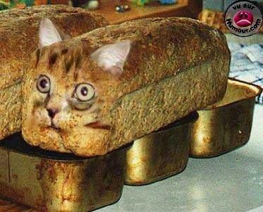 les_chats_aiment_le_pain