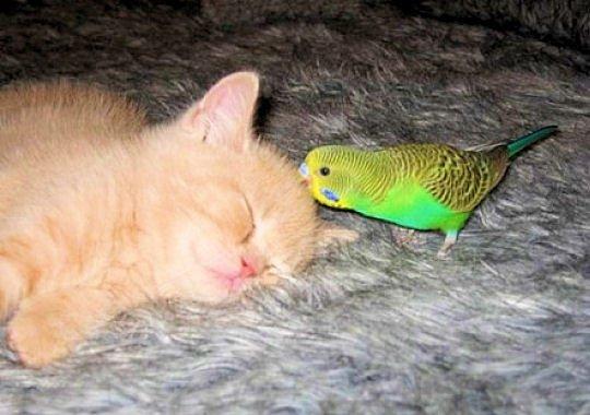 chat-l-oiseau-302642
