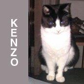 KENZO_assis