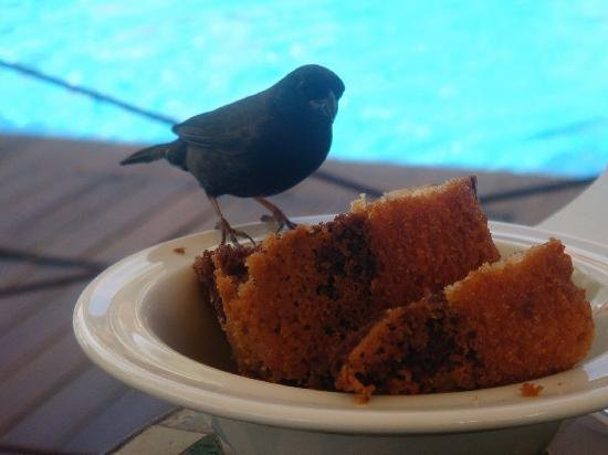 petit-dejeuner-avec-les-oiseaux