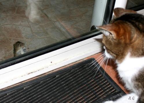 Le-chat-et-le-mulot