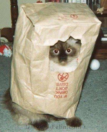 big_5727_undercover-cat