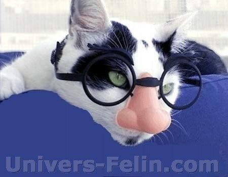 big_6757_chat_lunettes