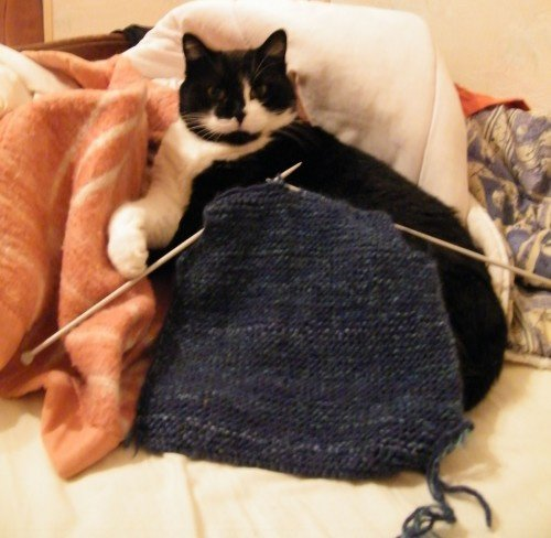chats_de_blogs-chat_tricot-img
