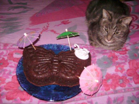 Gateau-au-chocolat-de-Lazare-Meme-mon-chat-n-y-resiste-pas