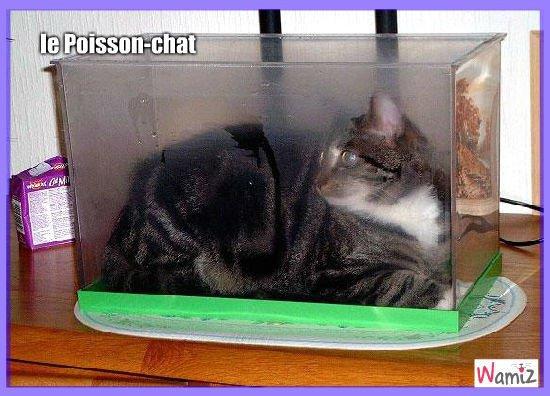 poisson-chat-22948