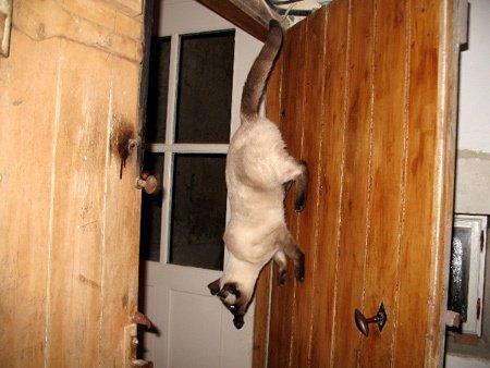 450-acrobate