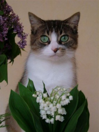 muguet-chat-le-chambon-feugerolles-france