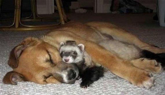 animal_friendship_44