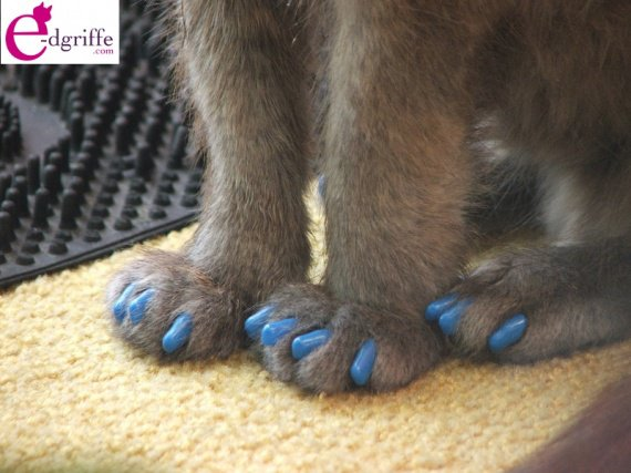 protege-griffe-chat-chien-softclaws-img_edgriffe_48