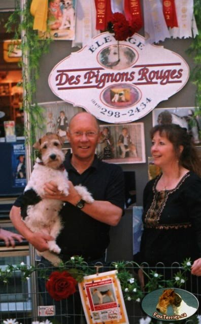 album_fox_terrier52_Jean-PierreTalbot_2004