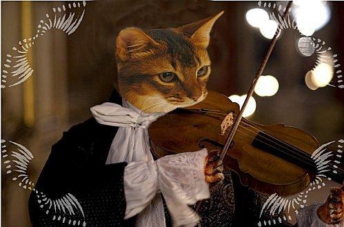 chat-mozart-avec-bordures