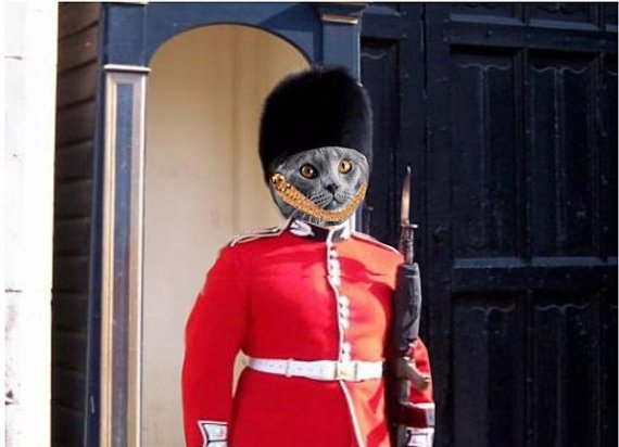 mon-chat-en-Angleterre