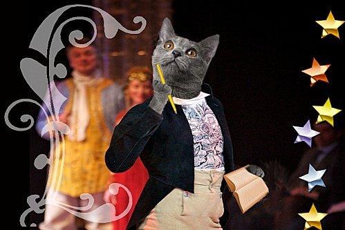 mon-chat-figaro-avec-etoiles