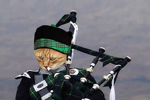 mon-chat-joue-de-la-cornemuse