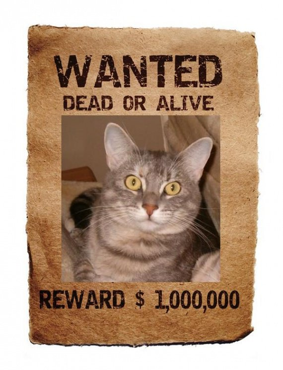 wanted-Eole_poster-1_p