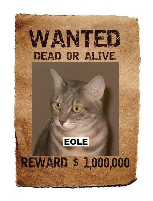 WANTED-EOLE_poster-1_p_B
