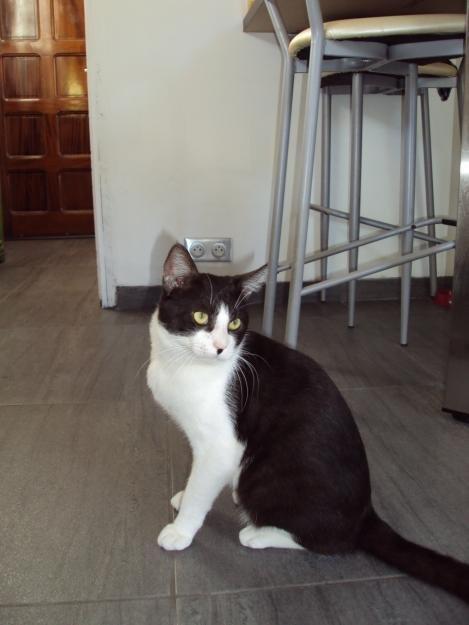 Chat-Noir-Blanc-type-Felix-lAubarede