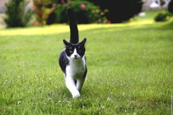 chat-noir-et-blanc