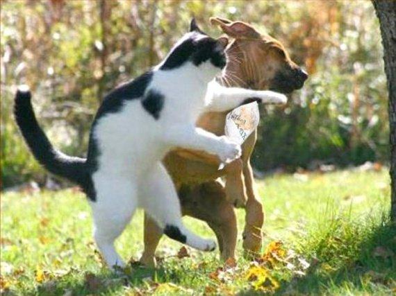 chat_et_chien