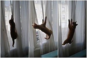 chats_et_rideaux